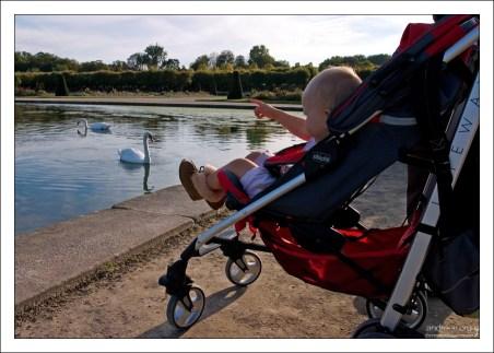 Младенец и лебеди :)