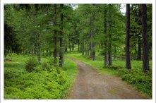Ботанический сад расположен в своеобразной котловине, окруженной с трех сторон холмами.