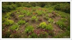 Чуть более теплый климат в ботаническом саду позволяет выращивать свыше 50 видов растений, которые климатически не характерны для северных широт.