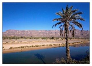 Одинокая пальма на берегу Draa.