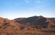 Акации, разбросанные у подножия Djebel Anaour.