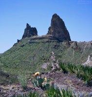 """Маленький грушевидный кактус на обрыве напротив скалы """"Ослиные уши""""."""