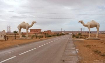 Целующиеся верблюды на въезде в Тан-Тан. (The Kissing Camels Of Tan-Tan).