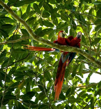 Ары притаились над тропой в национальном парке Карара.