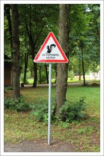 Белки - опасные животные. Елагин остров.