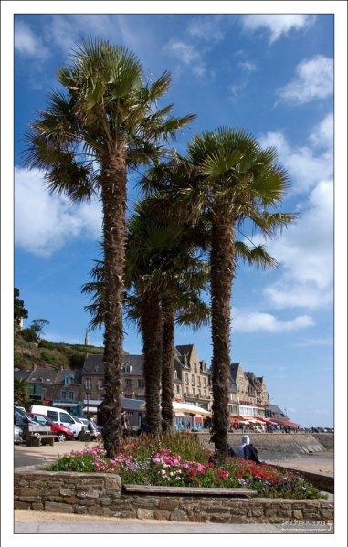 Пальмы на набережной в Канкале.