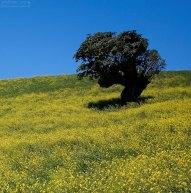 Желтое поле и хозяин.