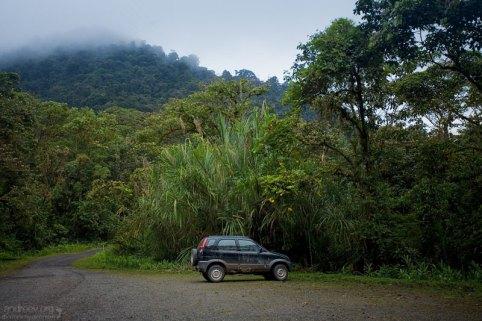 Дождь в тропиках. Национальный парк Tapanti NP.