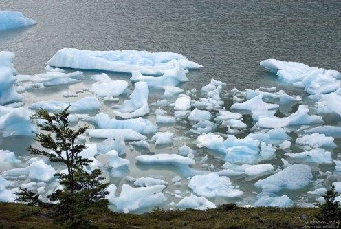 Тусовка льдин у берега.