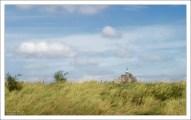 Поля-польдеры, отвоеванные человеком у моря, где разводят овец породы La Grévine.