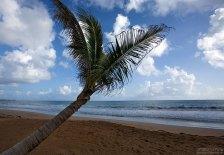 Пальмы так и тянутся к океану. Пляж перед гостиницей.
