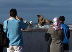 Туристы фотографируют чаек на набережной.