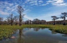 Озеро кипарисов.