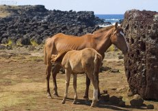 Лошадь с кормящимся жеребенком.
