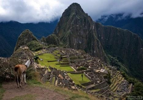 Одна из многочисленных лам Мачу-Пикчу.