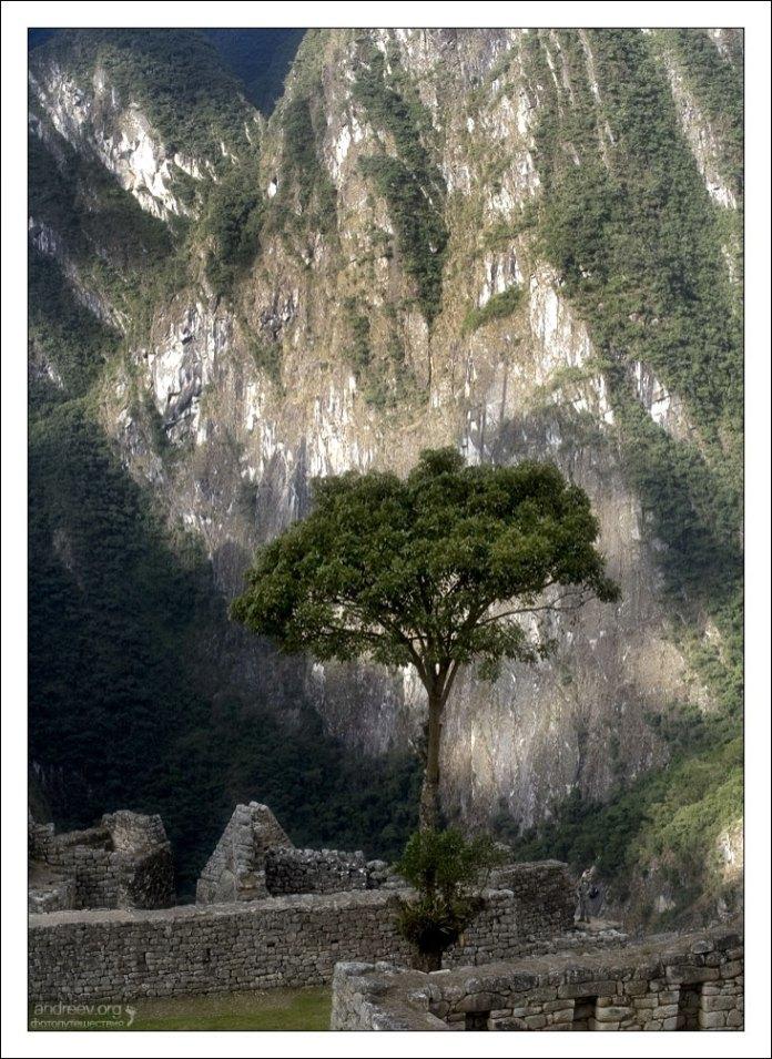 Белое дерево Минас-Тирита. Кстати, на фото затерялась фигурка человека. Кто найдет - молодец!