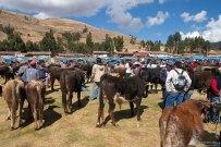 Продажа домашнего скота.