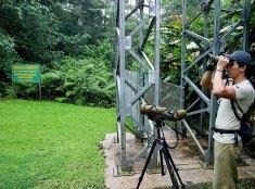 Гид-проводник по джунглям.