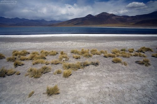 Соляные берега и пушистые кустики. Laguna Miscanti.