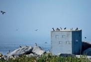 Хатка (blind) для фотографирования птиц с близкого расстояния.