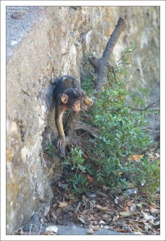 Любая больная или травмированная обезьяна помещалась в Королевскую военно-морскую больницу.