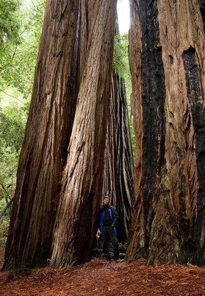 Между огромных деревьев на тропе Tall Trees. Redwood National Park.