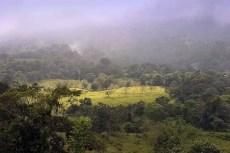 Джунгли под дождем.