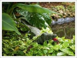 Раскрывшийся цветок красного имбиря в крокодильей пасти.