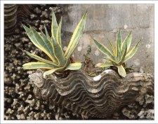 Лепнина в виде раковин и кораллов с настоящими растениями. Дворец Пена.