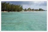 Заросли вечнозеленых казуарин (лат. Casuarina) на Rum Point.