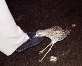 Нападение на Катин ботинок.