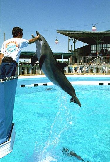 Рыбы захочешь - еще не так прыгнешь! Gulfarium, Fort Walton Beach.