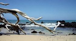 Залив Waialea.