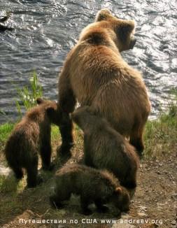 Молодая мама медведица с потомством.