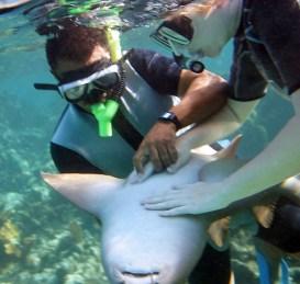 Катя с гидом делают акуле-няньке массаж сердца :) Shark and Ray Alley, Барьерный риф.