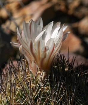 Игольная подушечка с цветком.