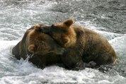 Медведи Инь и Янь.