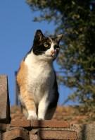 Колизейский кот.