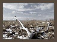 Берег озера Шамплейн. Первые попытки художественной фотографии :)