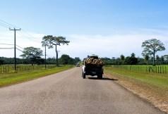 Западное шоссе (Western Hwy) и грузовик с кокосами. Справа виднеется национальное дерево Белиза - сейба.