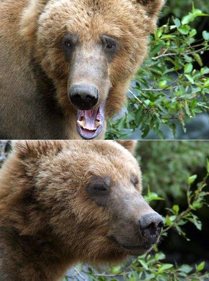 Самый добрый в мире медведь, с ленинским прищуром.