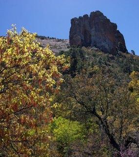 Сосновые и кленовые заросли на склонах каньона. Pine Canyon trail.