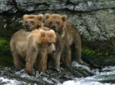 Сердитые медвежата.