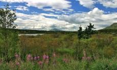 Растительность около реки Brooks river.