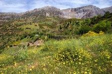 Склоны гор, усыпанные весенними цветами. Недалеко от Фив.