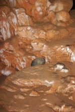 Высший уровень пещеры ATM (сухой). Хорошо сохранились предметы быта древних индейцев майя.