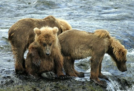 Да, тяжела жизнь медвежонка...