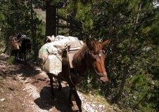 Лошади с поклажей по пути в убежище. Национальный парк Олимп.