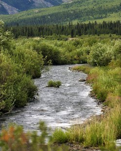Savage river около кемпинга.
