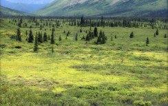 Желто-зеленая тундра.